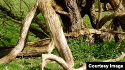 He visto a más de un árbol implorar misericordia, rodilla en tierra, y ser ultimado.