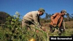 Estado cubano incumple promesas a los campesinos