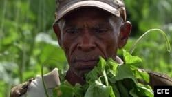 Foto de archivo de campesino cubano