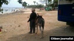 Reporta Cuba Un paseo en burrito por Playa Cazsonal Foto Luis Guanche
