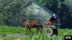 Trabas burocráticas a los productores de tabaco en el país
