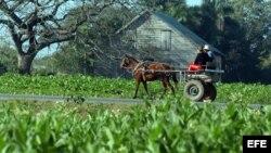 Productores se quejan de que no siempre reciben lo productos básicos como fertilizante y combustible.